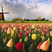 آداب و معاشرت در هلند