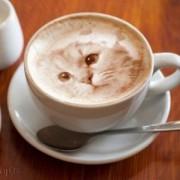 نقاشی های خارق العاده روی قهوه اسپرسو