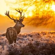 تصاویر خیره کننده ای از پارک های ملی بریتانیای بزرگ